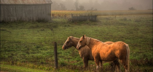 marc-mantha-two-horses-web